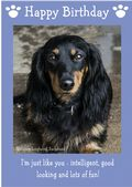 "Miniature Long Haired Dachshund-Happy Birthday - ""I'm Just Like You"" Theme"